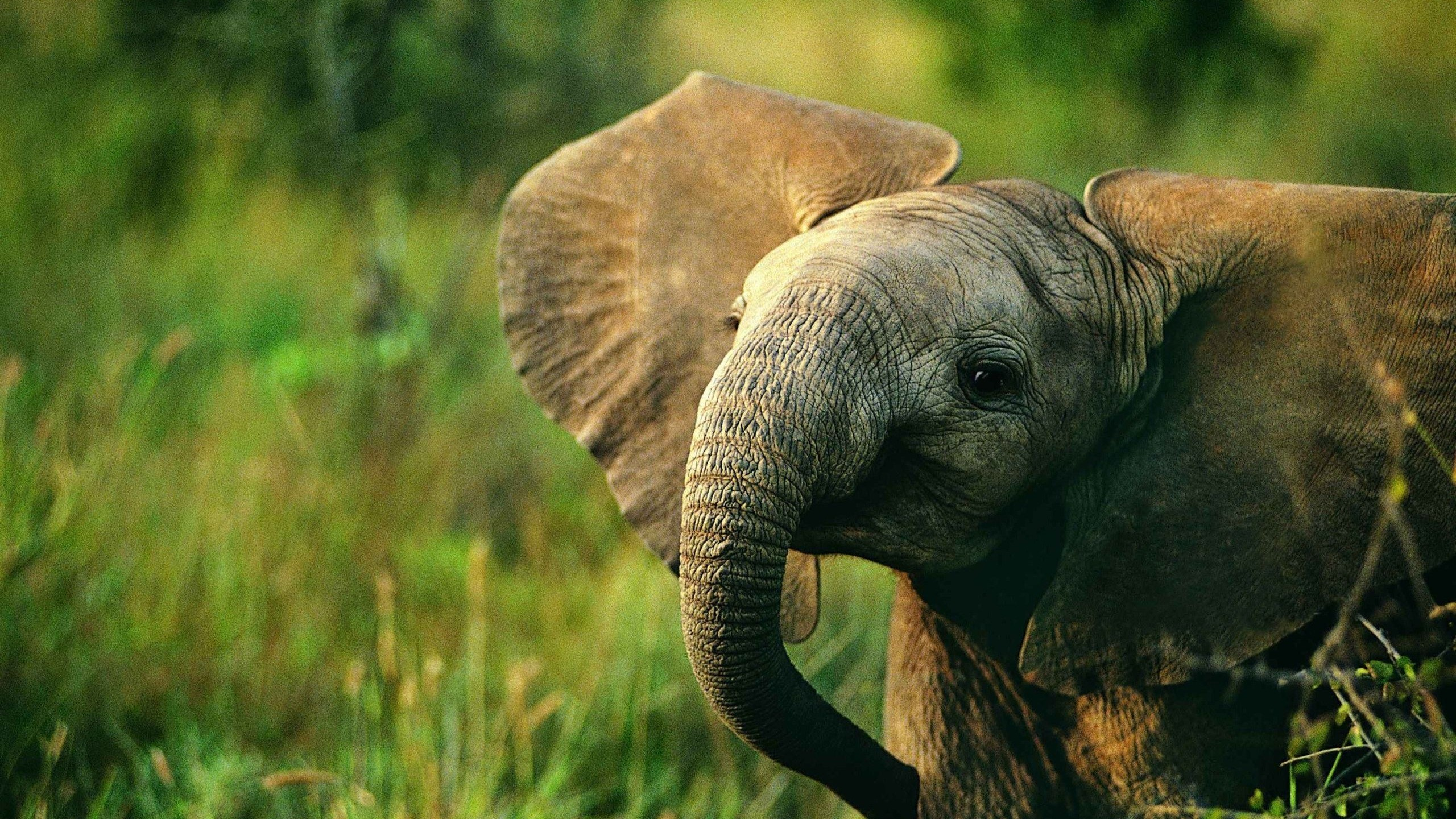 60 Beautiful and Cute Animal Wallpapers 2560x1440