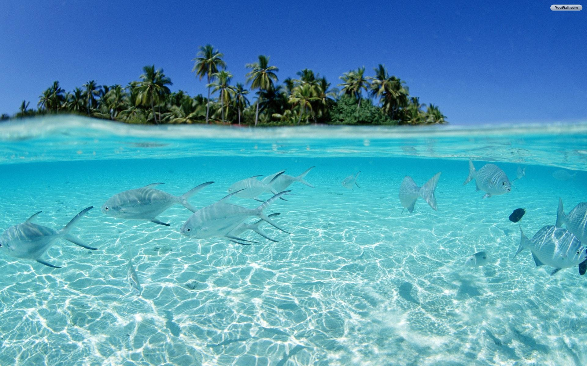 tropical island Fish HD Wallpaper Crystal Clear Water Tropical Island 1920x1200