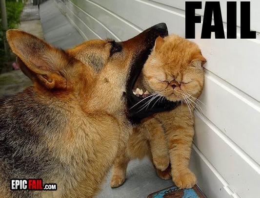 Epic Funny Cat Fails 21 Hd Wallpaper Wallpaper 533x405