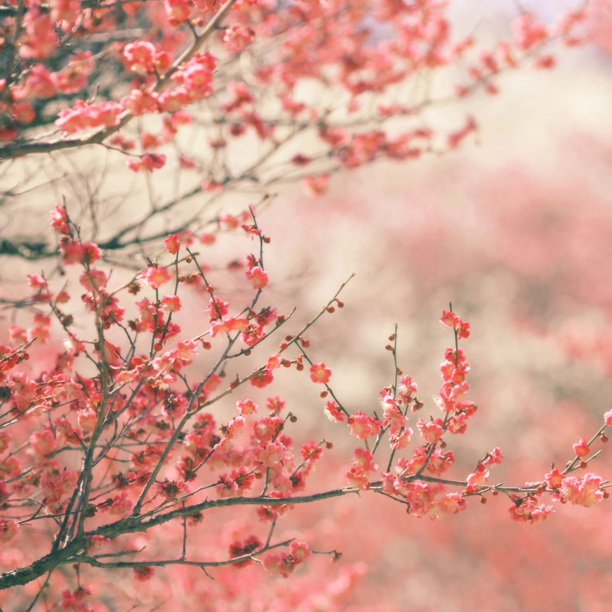 spring wallpaper for ipad   Wallpapers 2048x2048