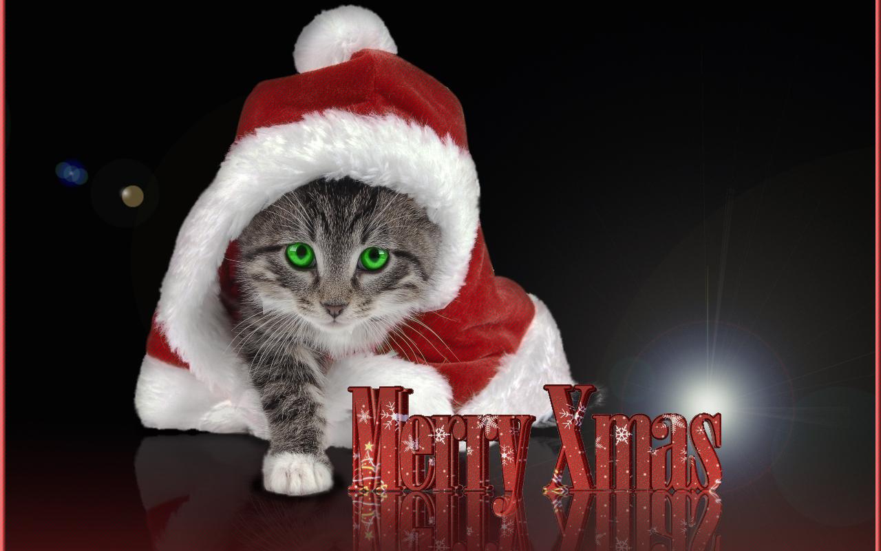 Christmas Christmas Kitty 1280x800