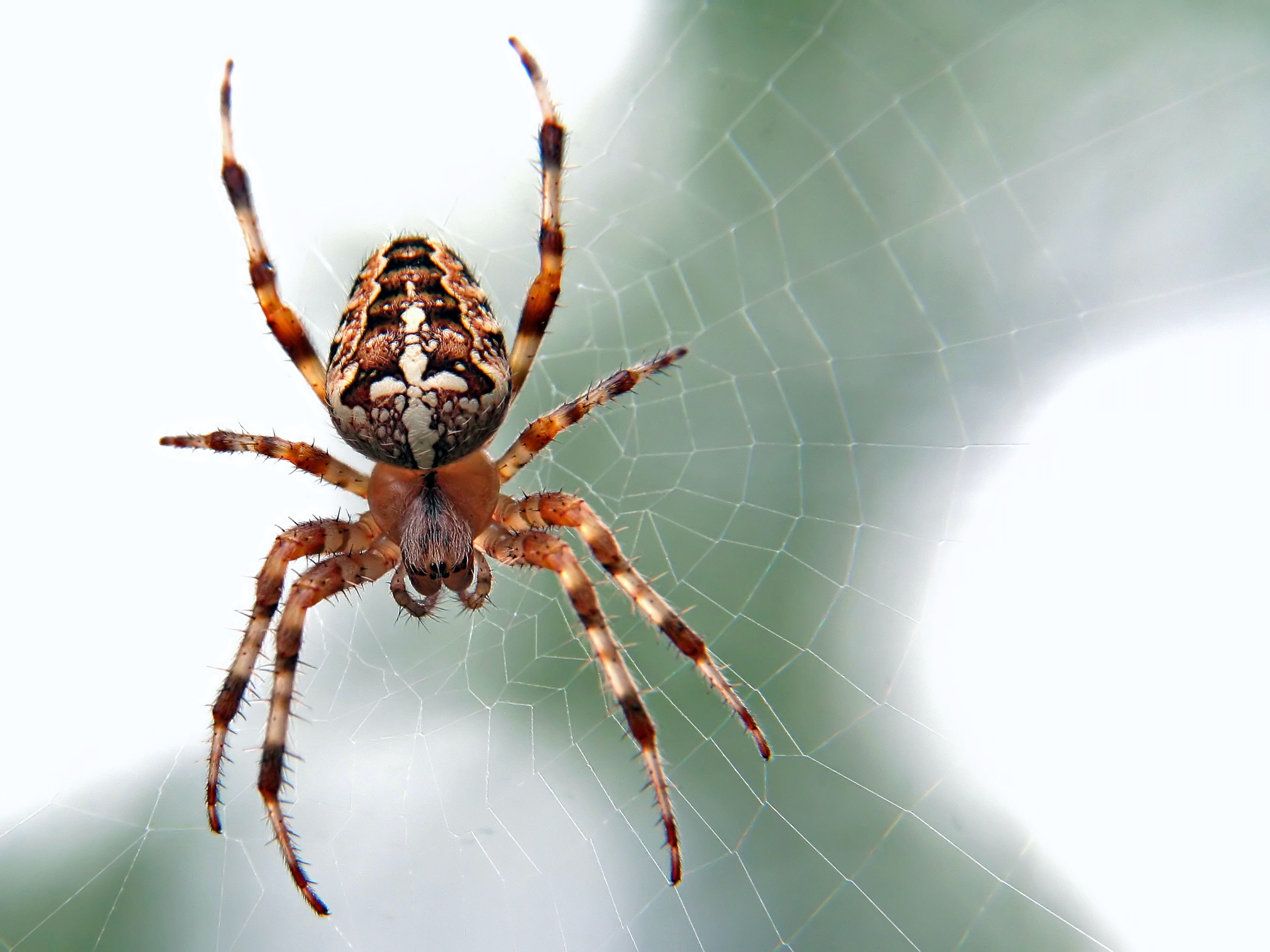 Spider Insect   3000x2250   Download HD Wallpaper   WallpaperTip 3000x2250