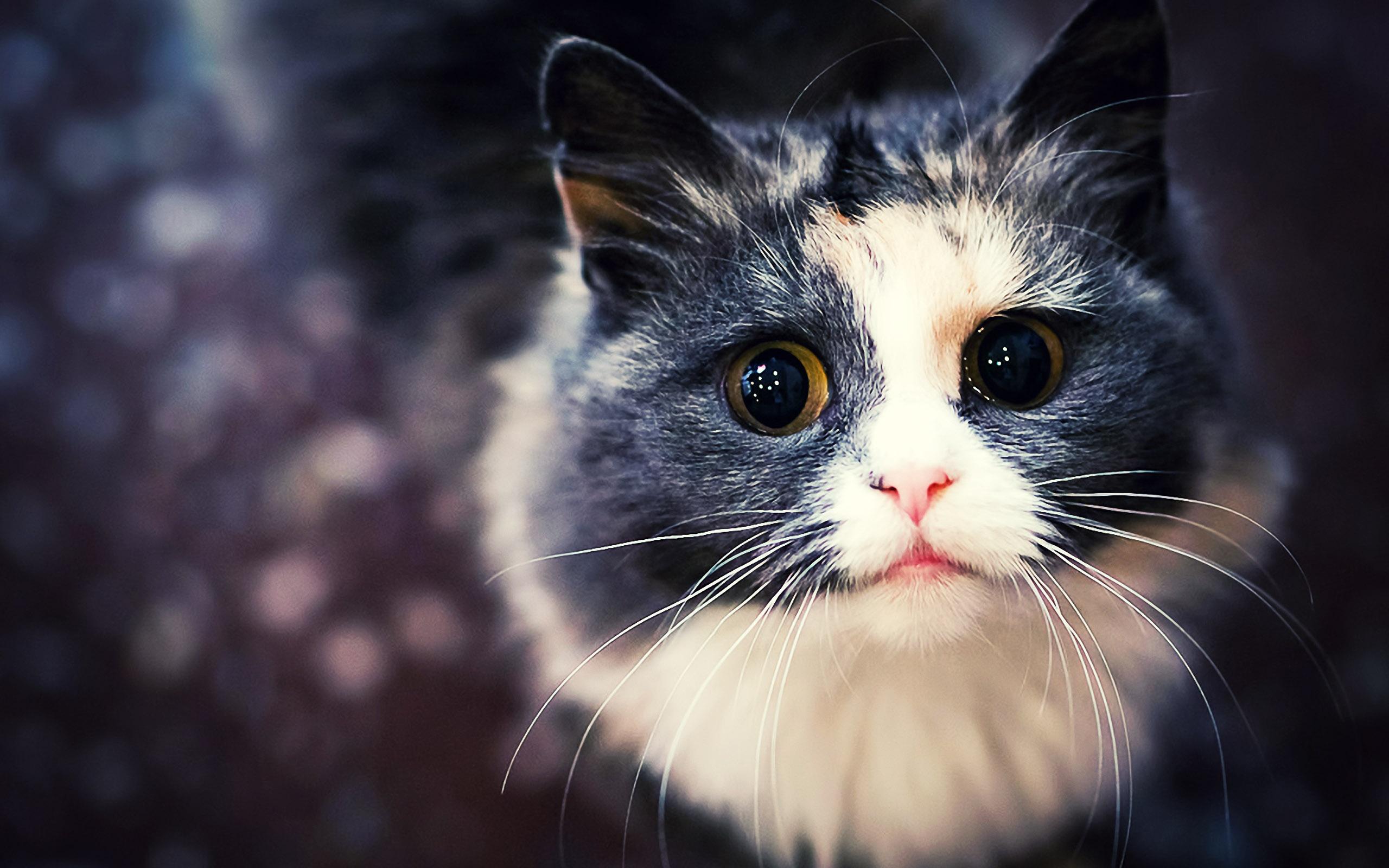 Cats Wallpaper Desktop h765242 Animals HD Wallpaper 2560x1600