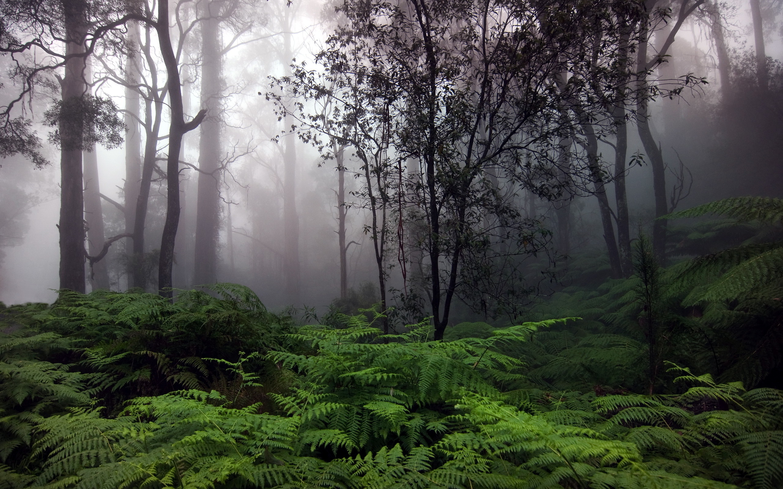 rain forest wallpapers 2560x1600
