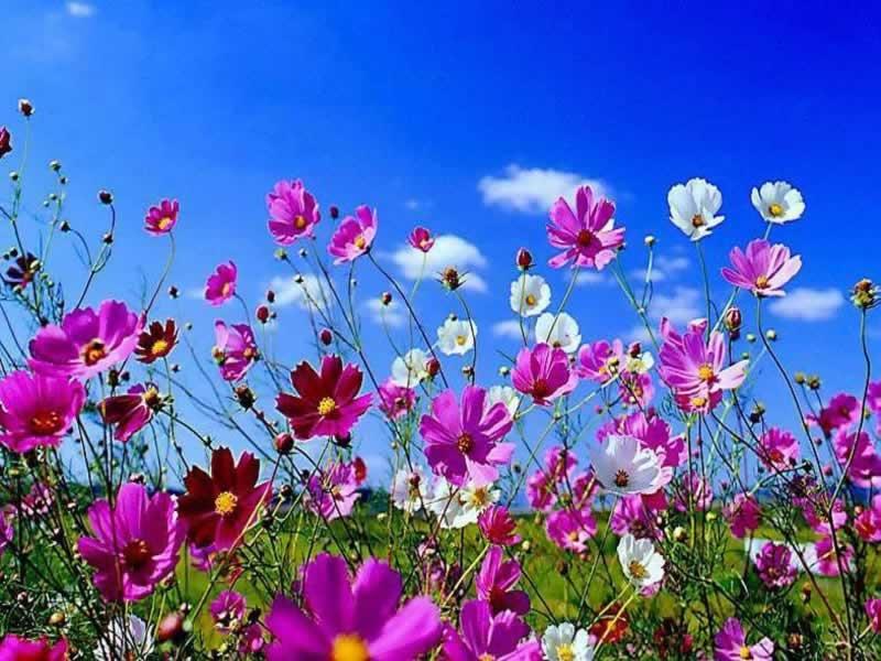 Free Download Spring Flowers Wallpaper Hd Beautiful Black