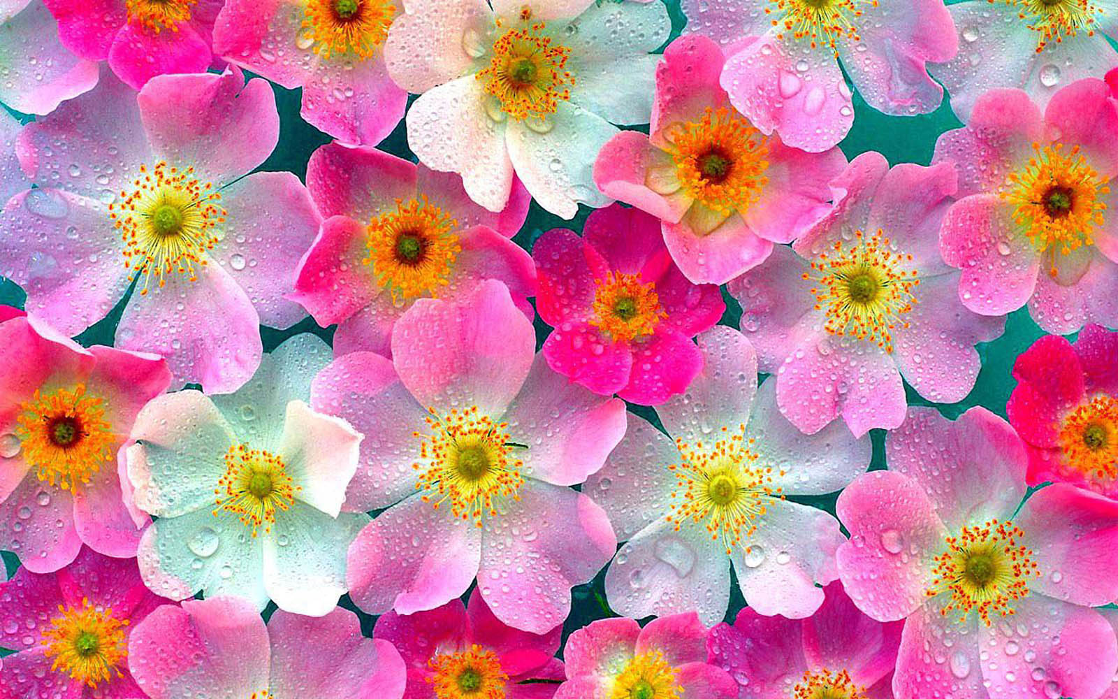 Description Flowers Pink Wallpaper is a hi res Wallpaper for pc 1600x1000