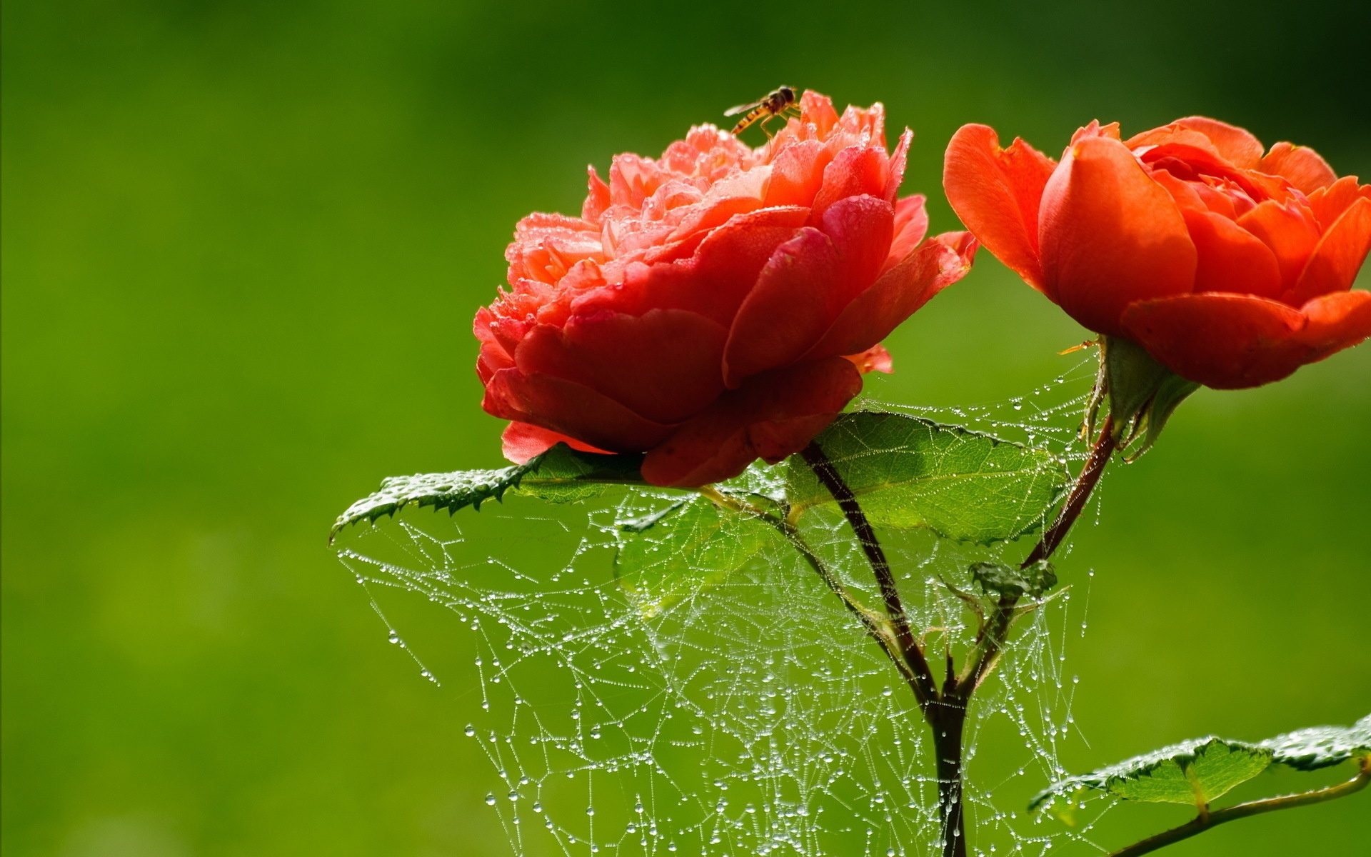 Love Flower Photos Hd Flowers Healthy