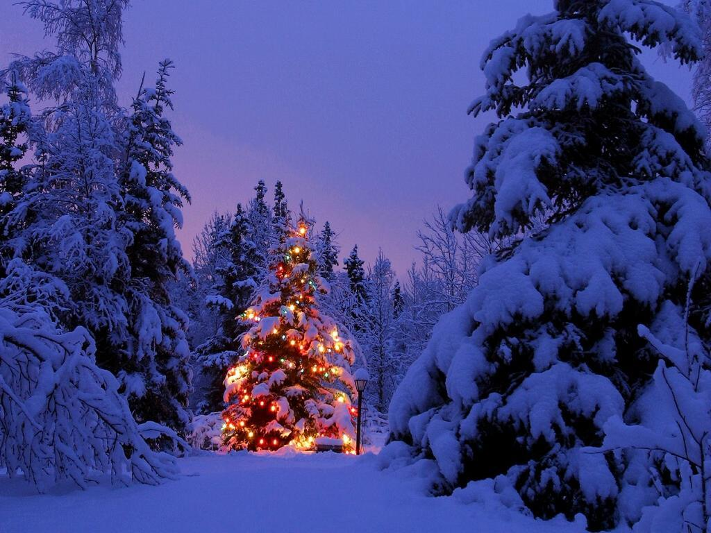 Snowy Christmas tree   wallpaper backgrounds   desktop wallpapers 1024x768