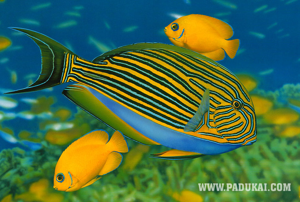 Colorful Fish Underwater 970x653