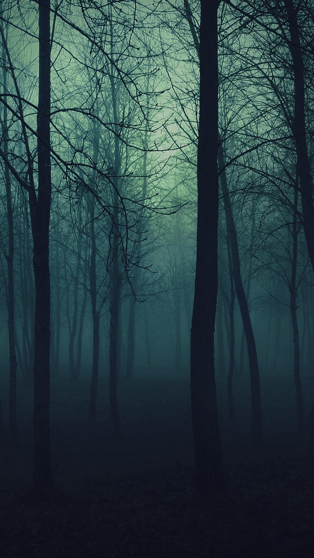 48 Dark Forest Iphone Wallpaper On Wallpapersafari