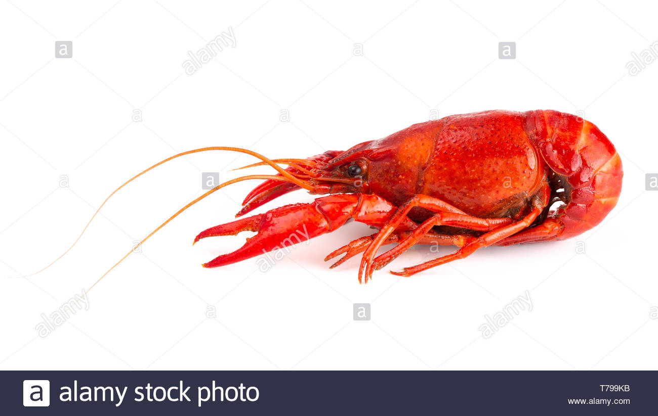 Cooked Red Crawfish Isolated on a White Background Stock Photo 1300x823