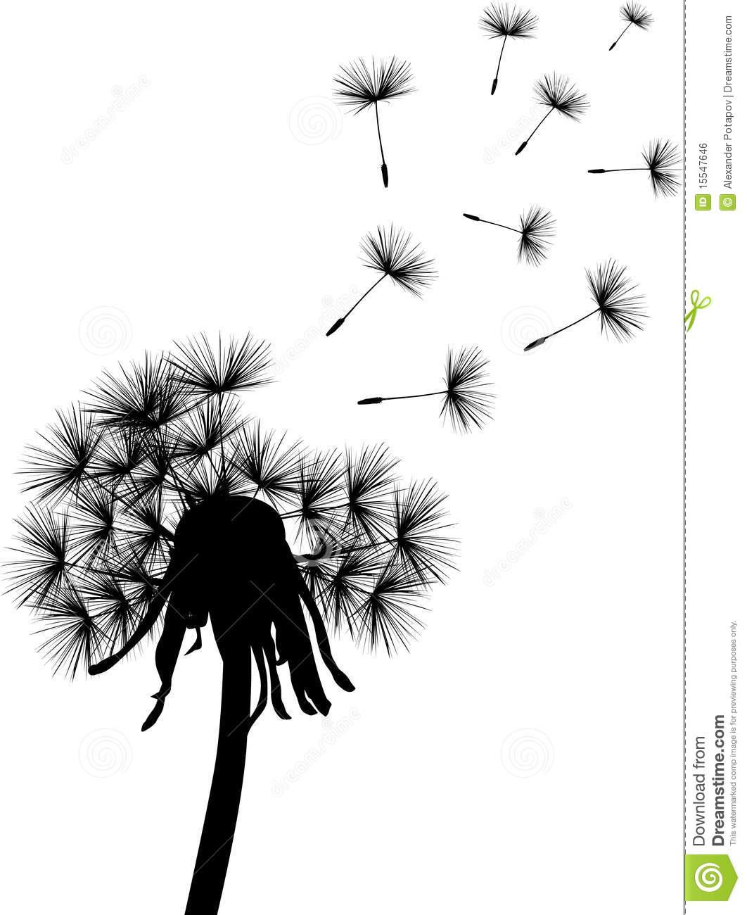 Dandelion Black And White Wallpaper Black dandelion plant 1062x1300
