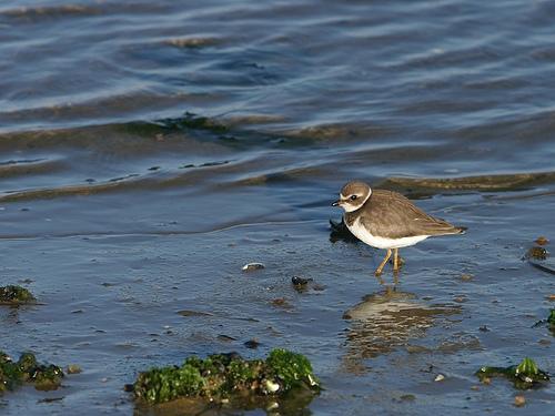 Oiseau sur plage Bird On Beach Flickr   Photo Sharing 500x375