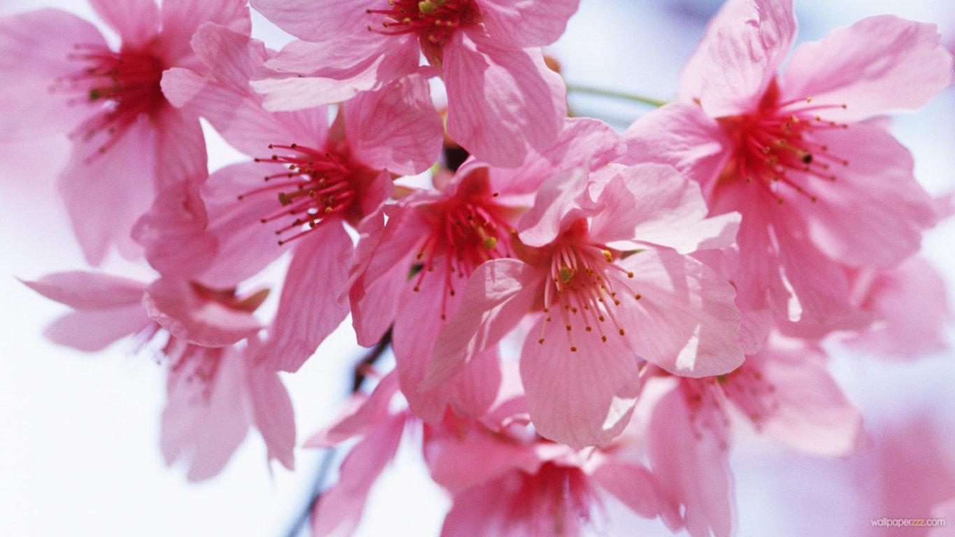 Spring Flowers Wallpaper Hd Wallpapersafari