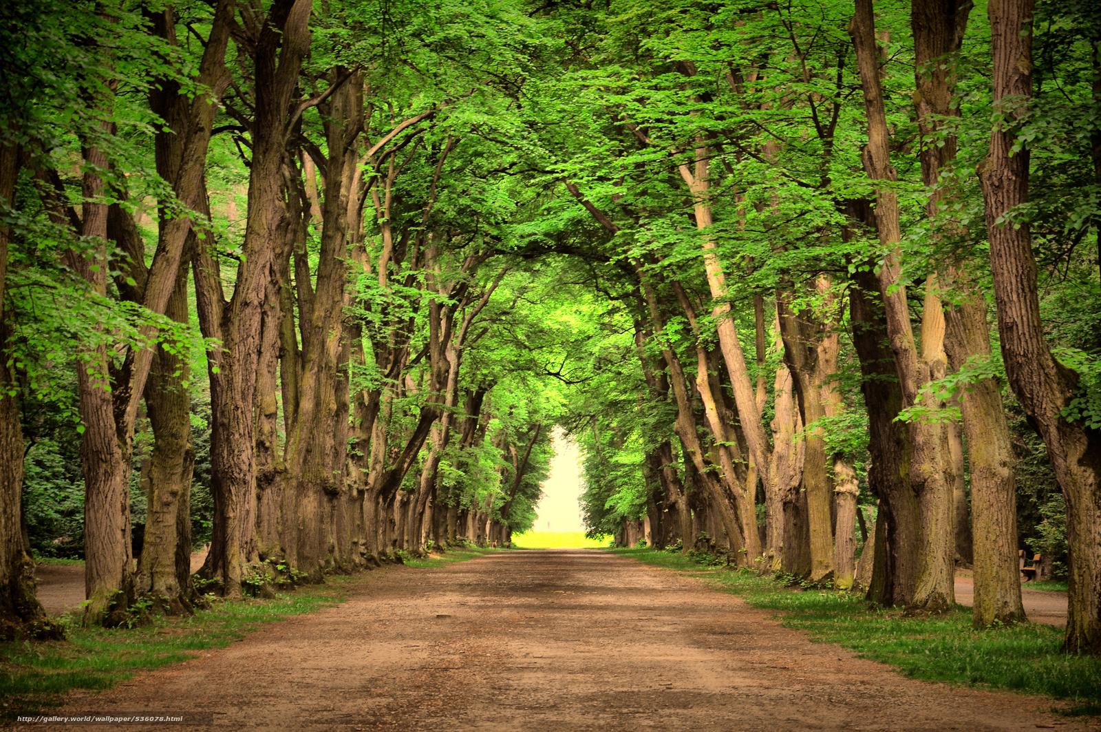 Beautiful Trees Wallpaper Wallpapersafari