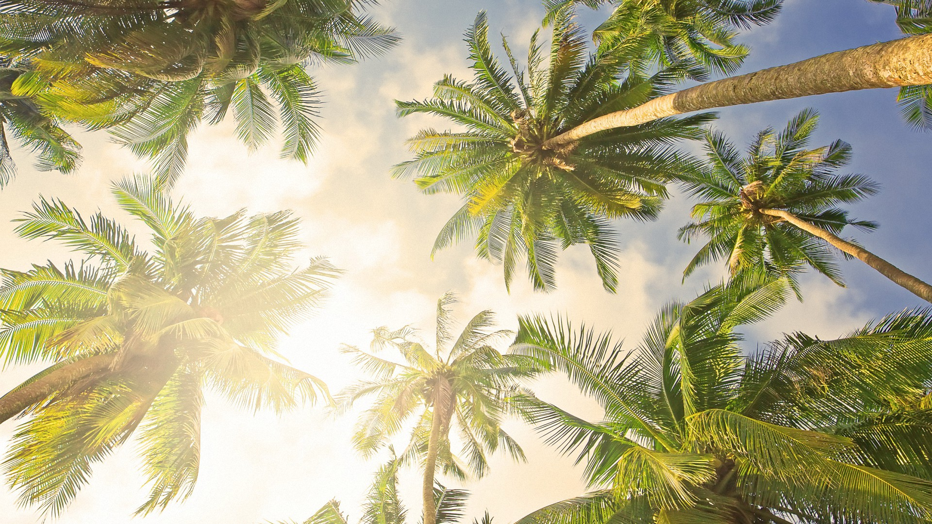 Bright Palm Tree HD Backgrounds   Desktop Wallpapers 1920x1080
