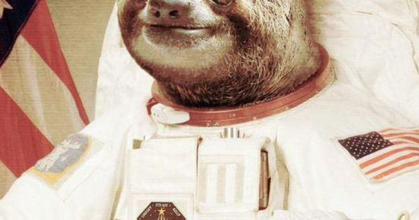 slothstronaut Random Pinterest Sloths Make Me Smile and 600x315