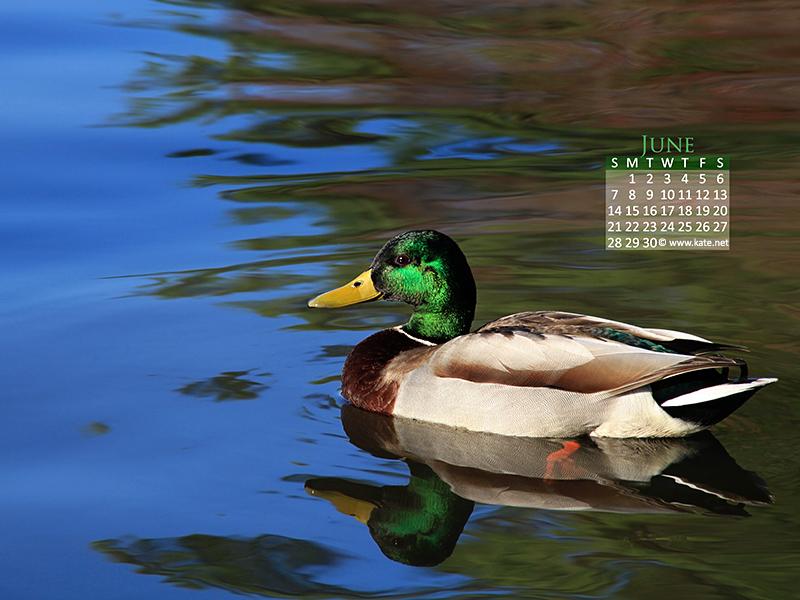 Calendar Wallpapers Desktop Wallpapers by Katenet 800x600