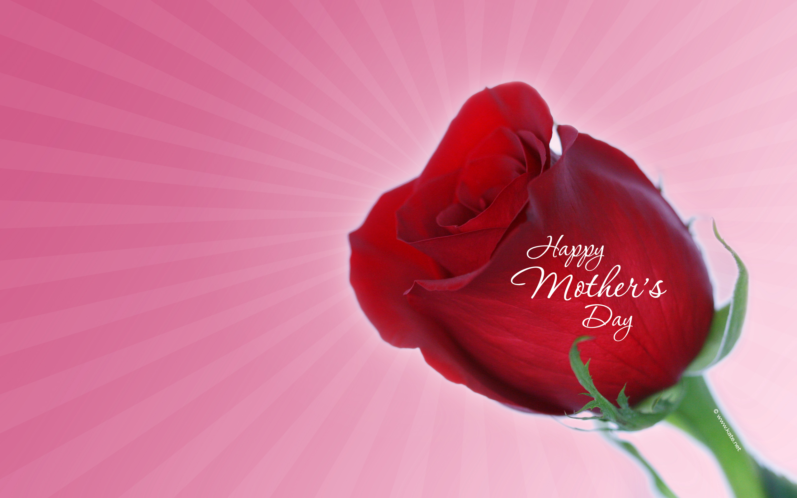 Pics Photos   Mother S Day Wallpapers 2560x1600