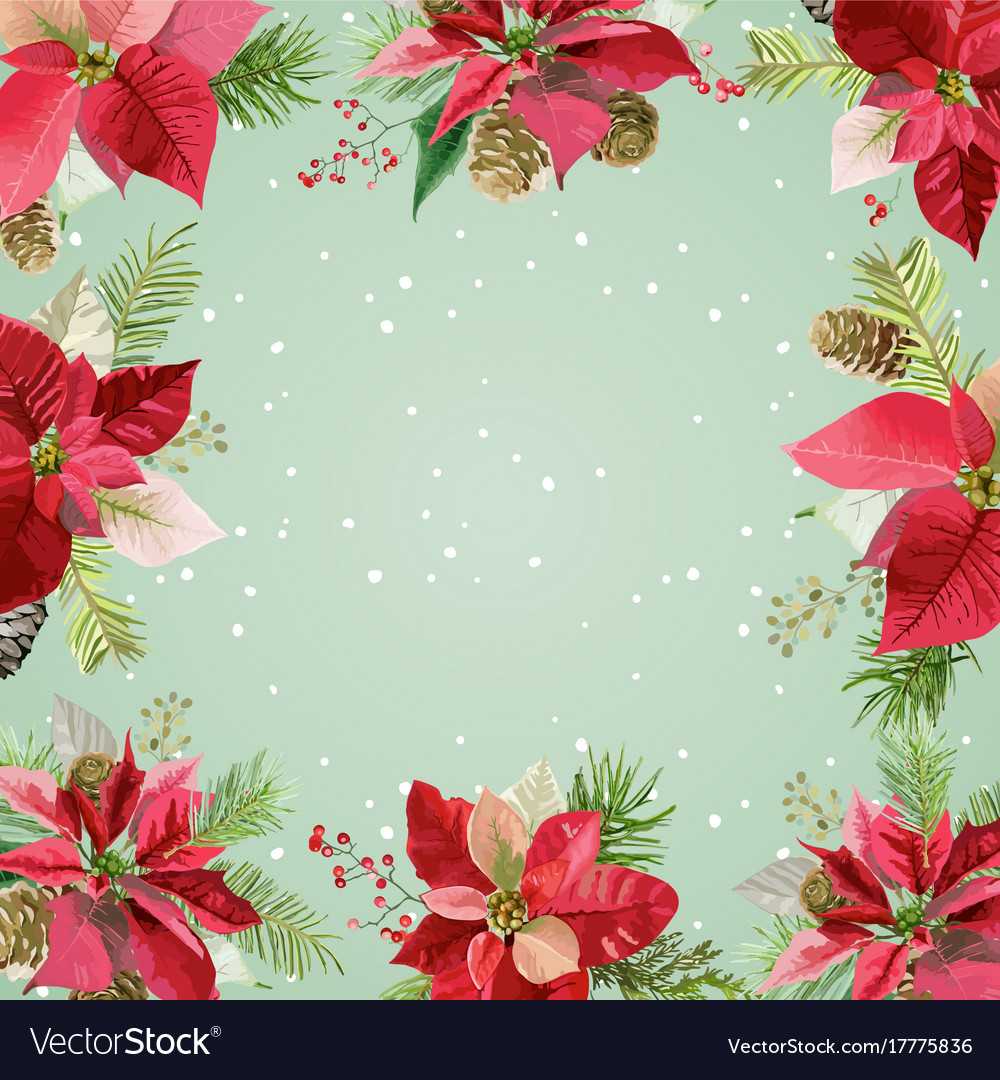 Christmas winter poinsettia flowers background Vector Image 1000x1080