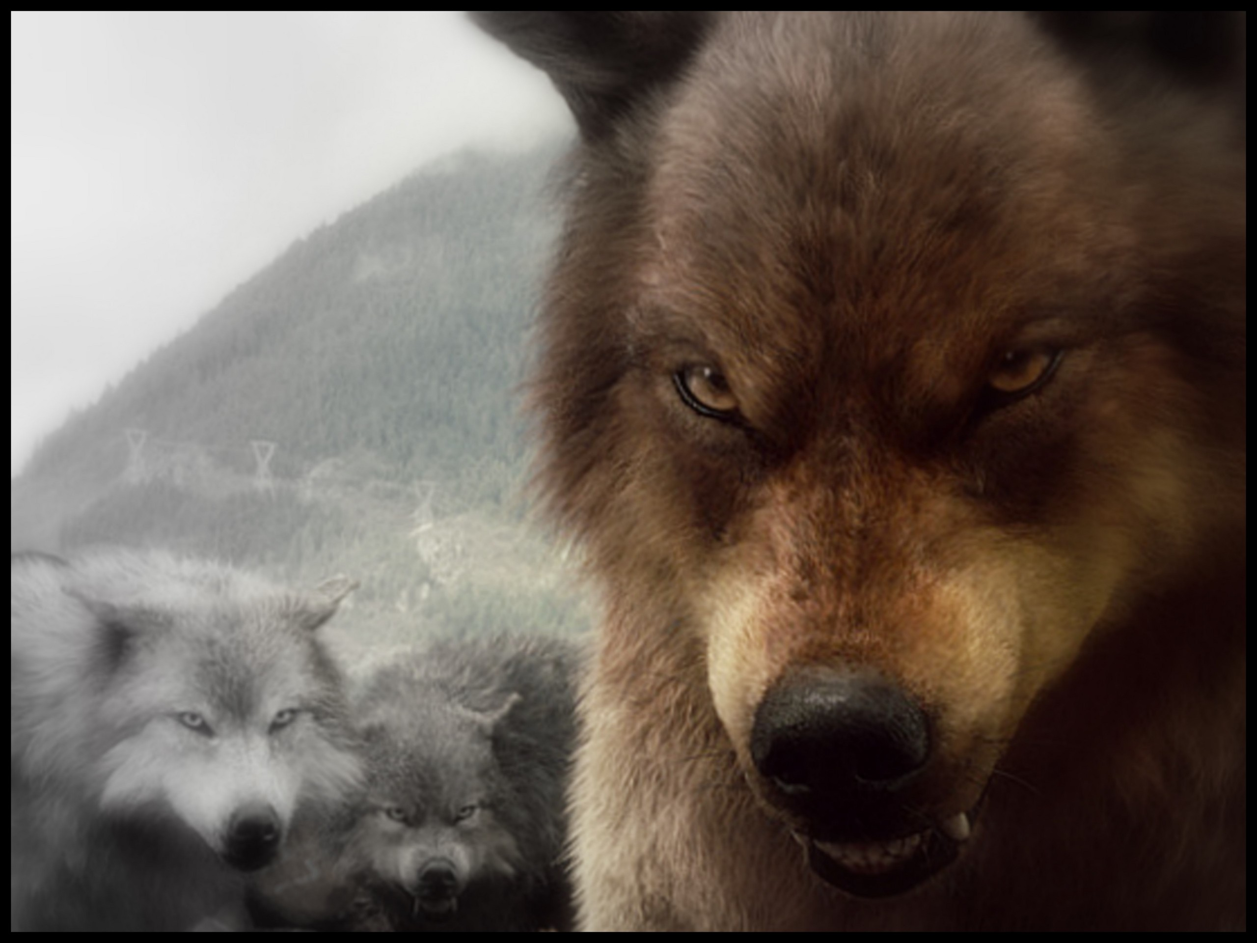 Twilight Series images bd wolves HD wallpaper and background photos 2560x1920