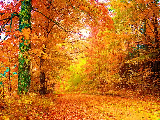19 2015 Author Ankit Categories Wallpapers Pictures Tags Autumn 550x413