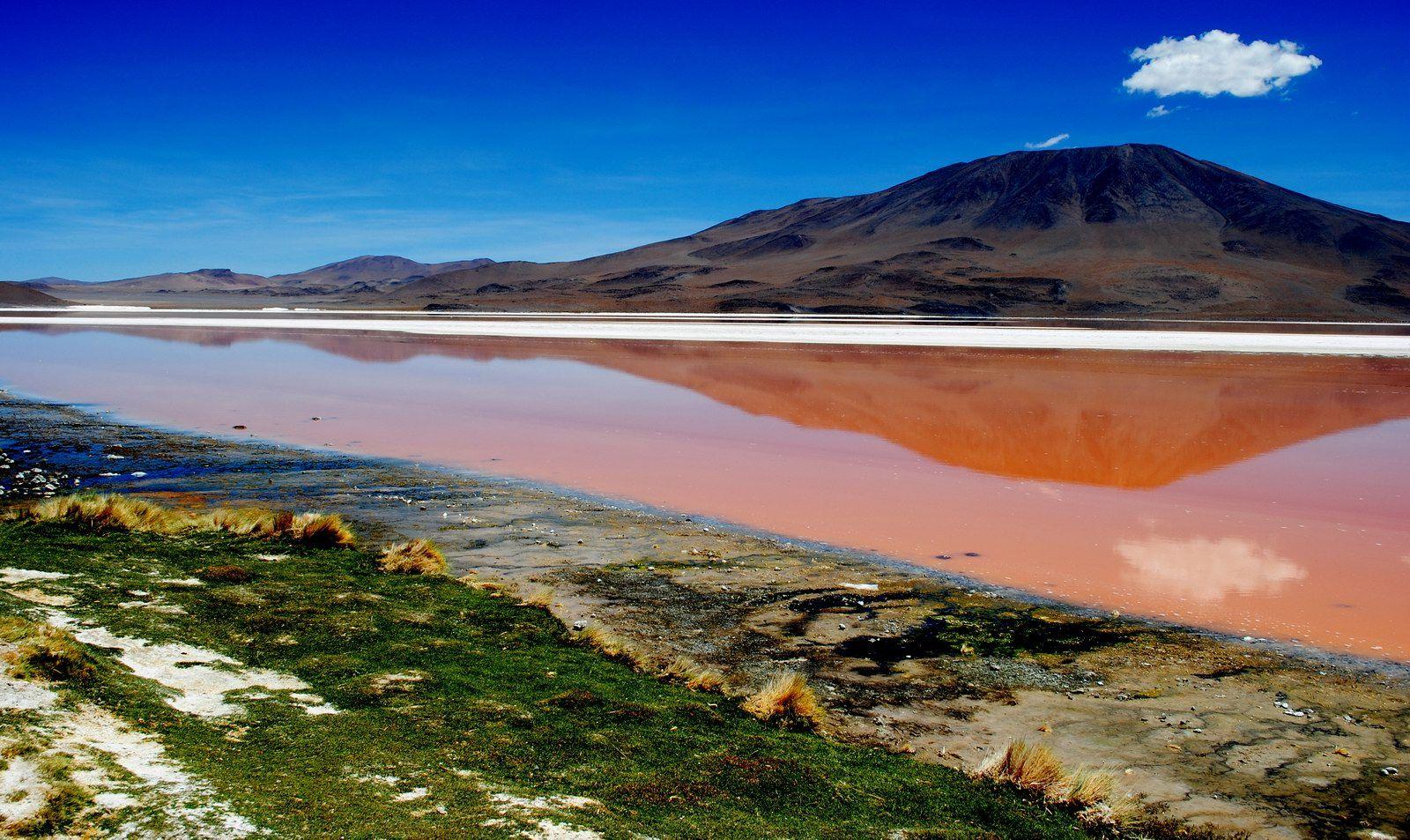 laguna colorada bolivia Laguna Colorada Bolivia Photo   HD 1600x953