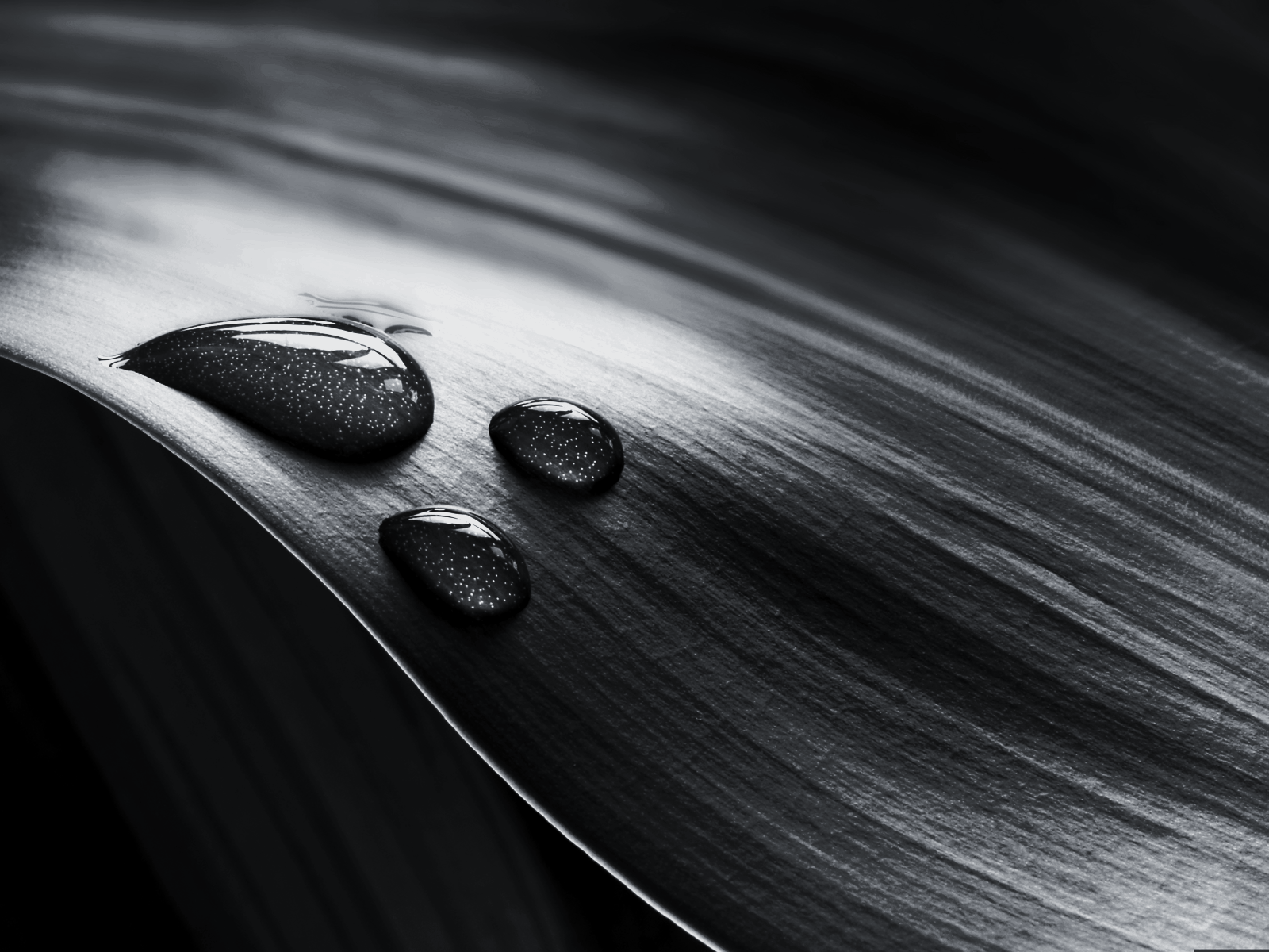 Black and White Leaf Water Drops wallpaper 2010 and BREAKING 1600x1200