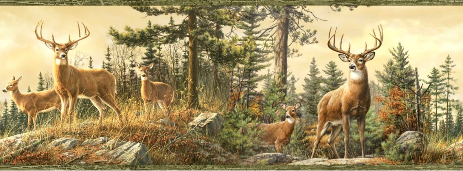Whitetail Deer Wallpaper Border All HD Wallpapers Gallery 1600x592