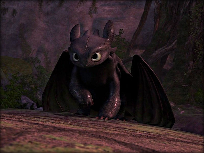 Toothless   Toothless the Dragon Wallpaper 32987034 800x600