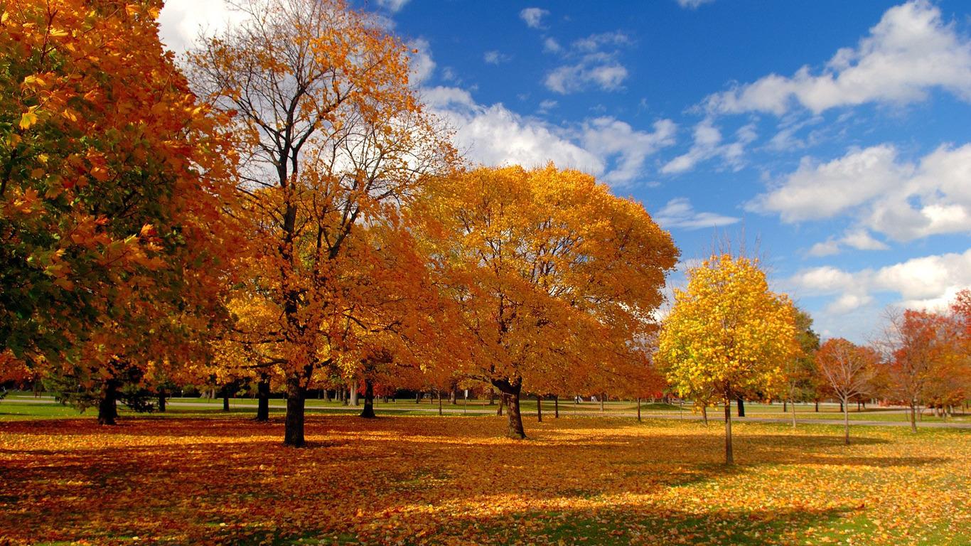 Fall trees wallpaper 11526 1366x768