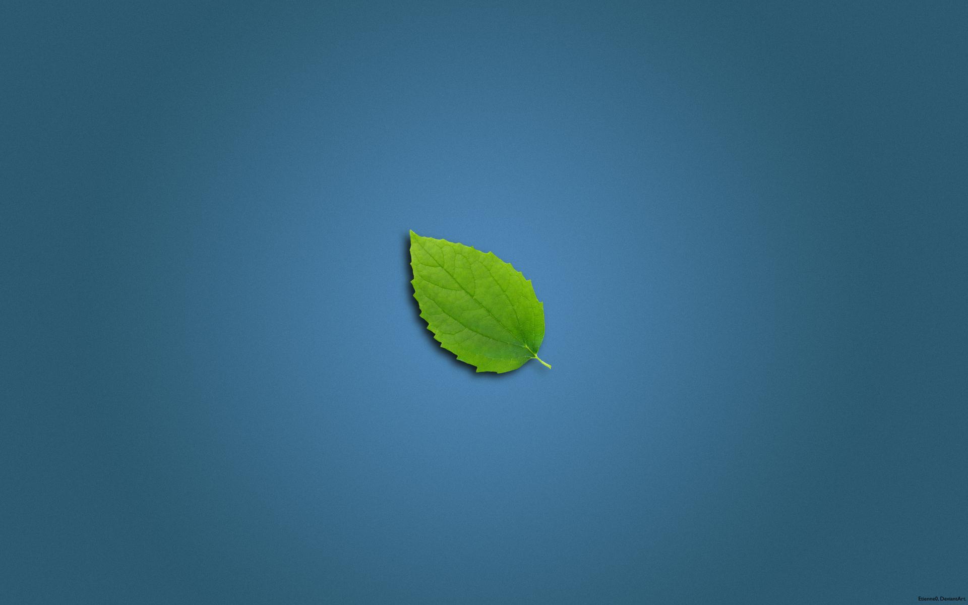 Clean Leaf Wallpapers   10018 1920x1200