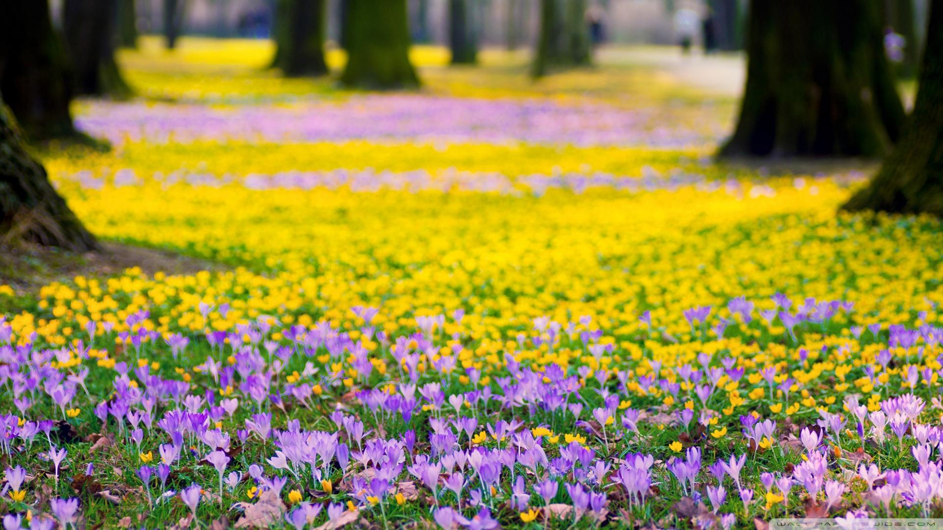 Spring Flowers Meadow Ultra HD Desktop Background Wallpaper for 4K 1920x1080