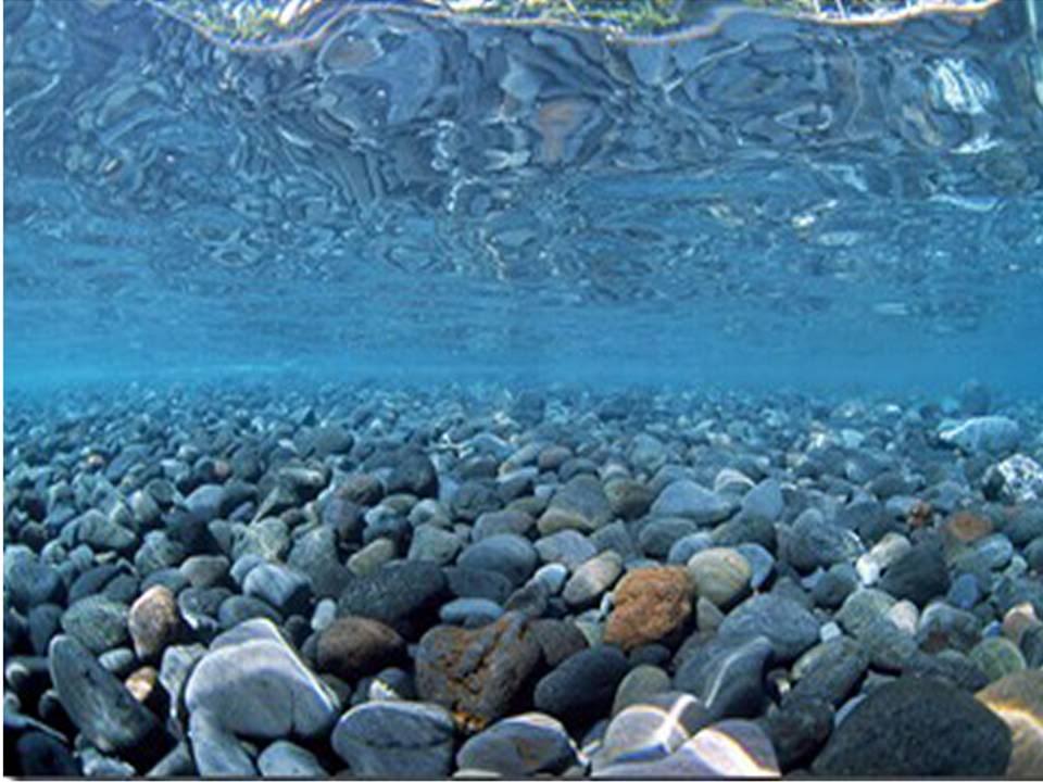 Vivarium Marine RiverRock Background 18 Tall Poster Fish Viv Tank Pic 960x720