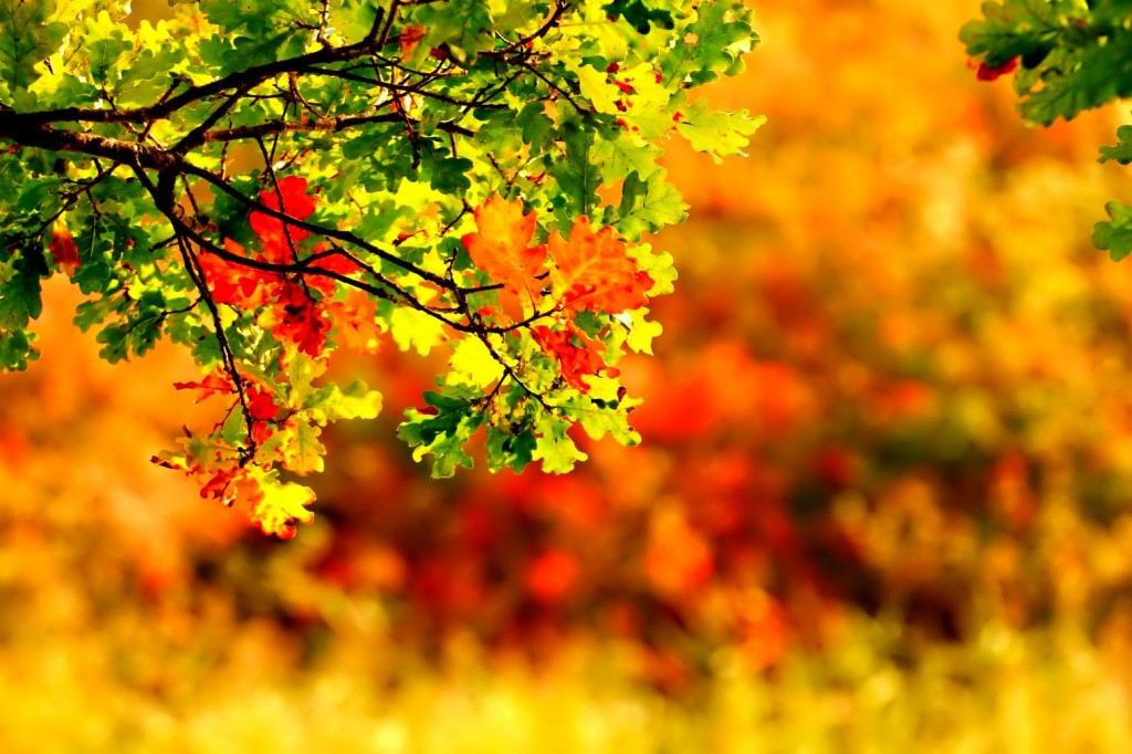 September Wallpapers High Quality Download 1024x682