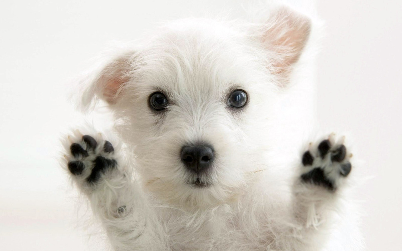 HD 3D Wallpapers Cute Puppy Paws Dog HD Wallpapers 1280x800