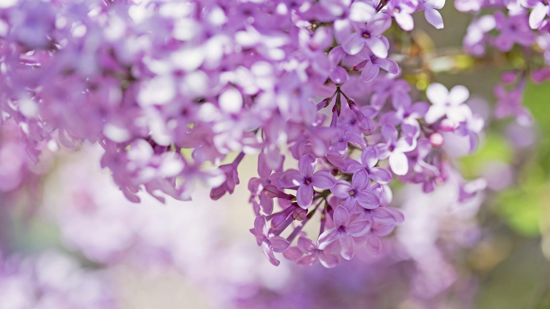 природа цветы ваза сирень  № 3063923  скачать