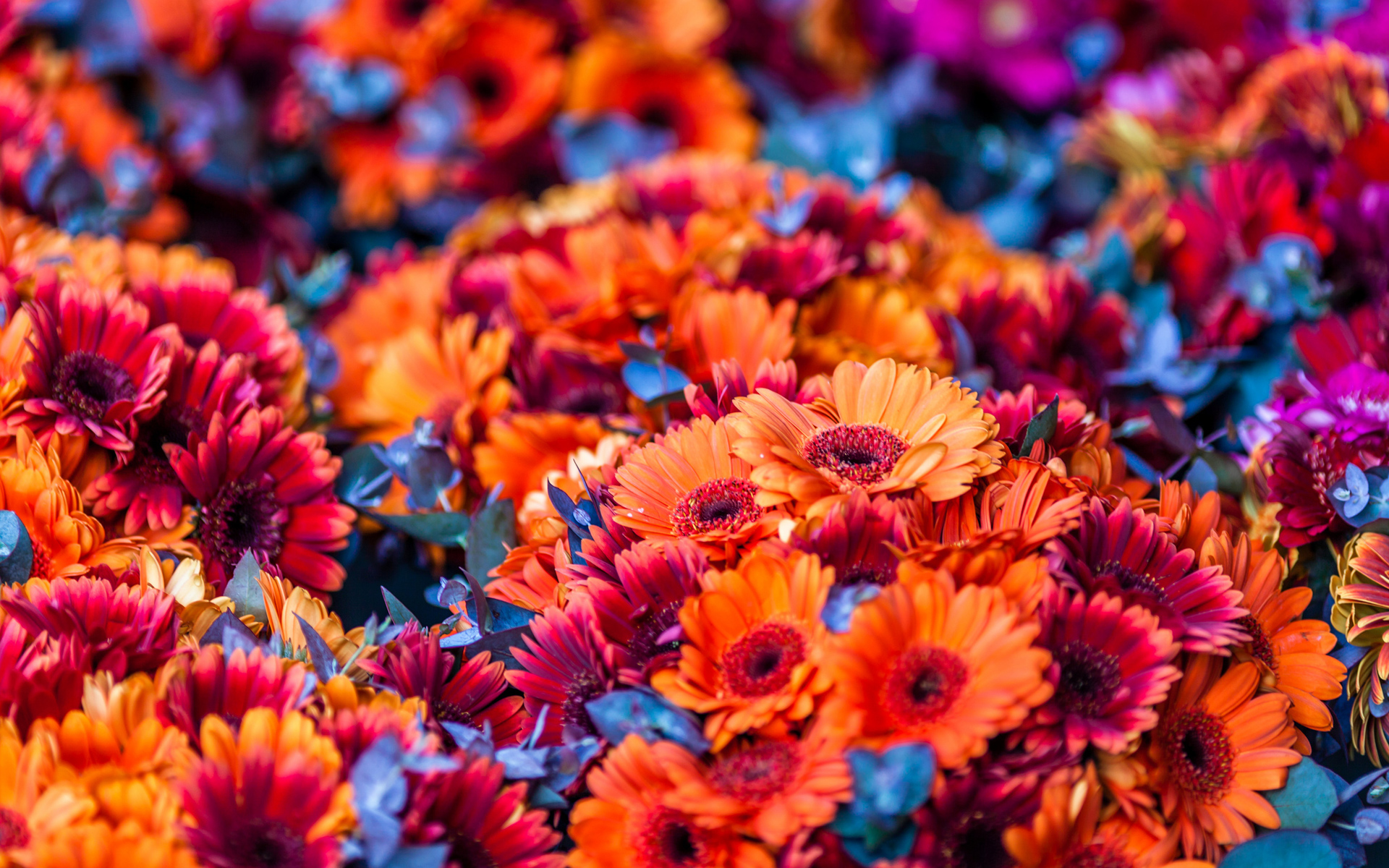 Colorful Flowers Blurred Background HD Wallpaper 1920x1200