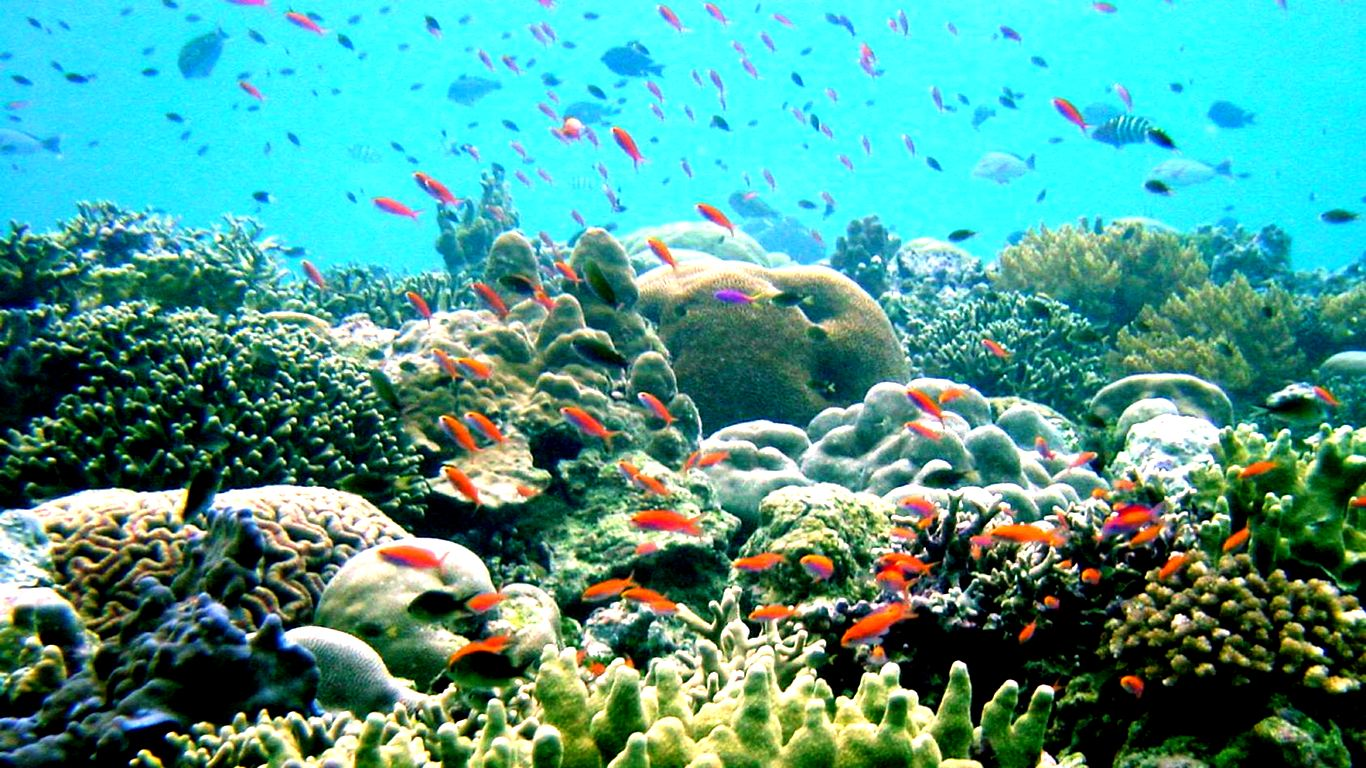 Great Barrier Reef wallpaper   ForWallpapercom 1366x768