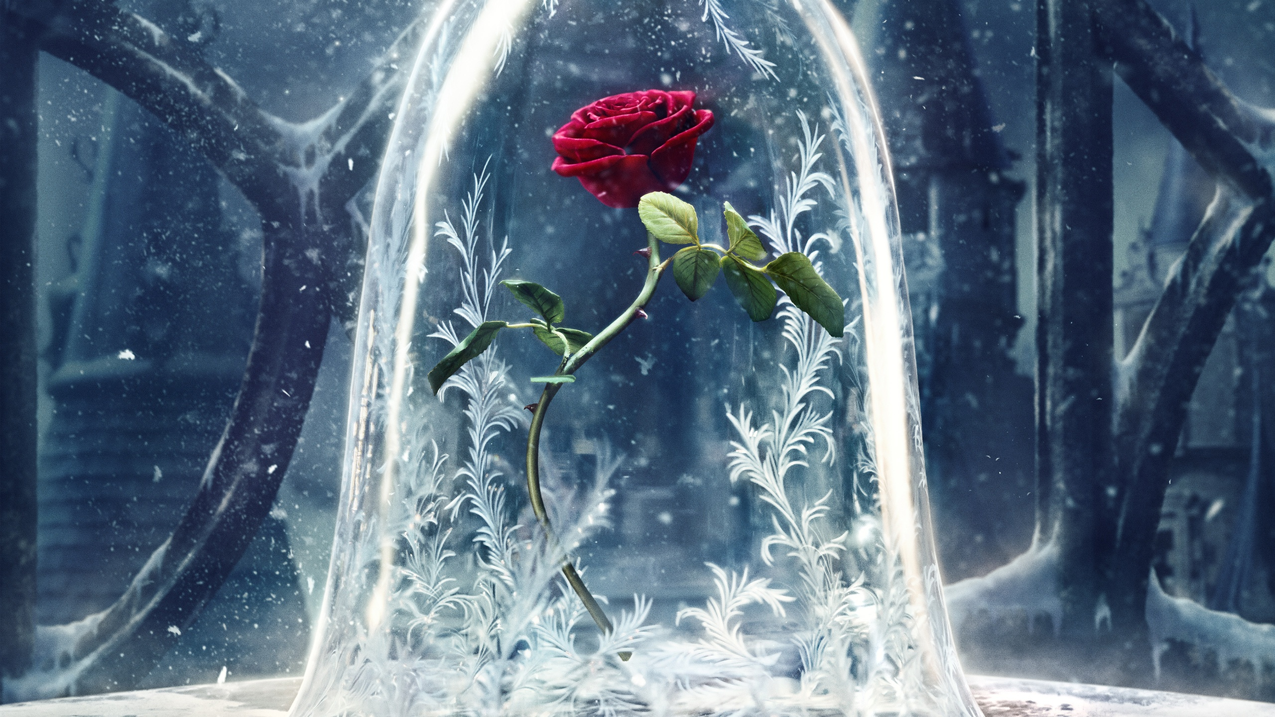 Beauty And The Beast Wallpapers and Background Images   stmednet 2560x1440