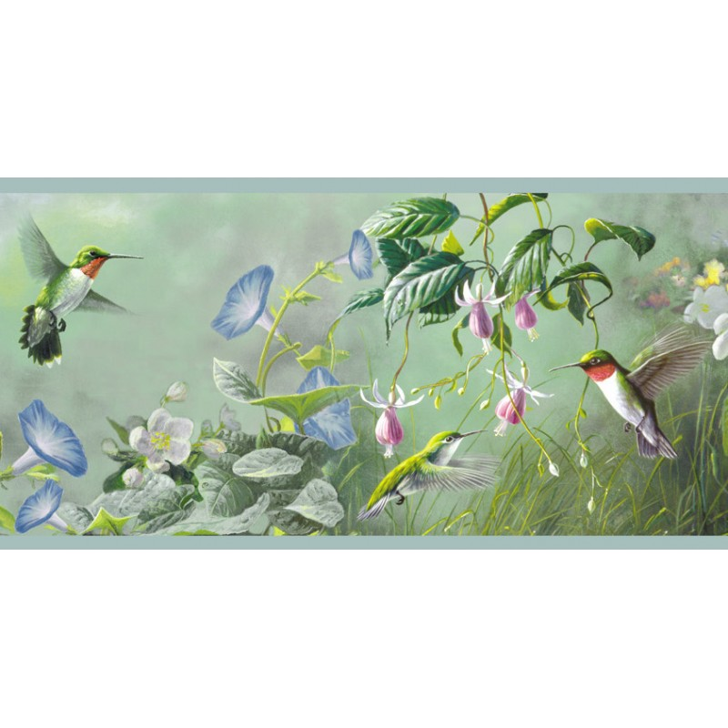 Wallpaper Border Animals Nature Hummingbird Border 800x800