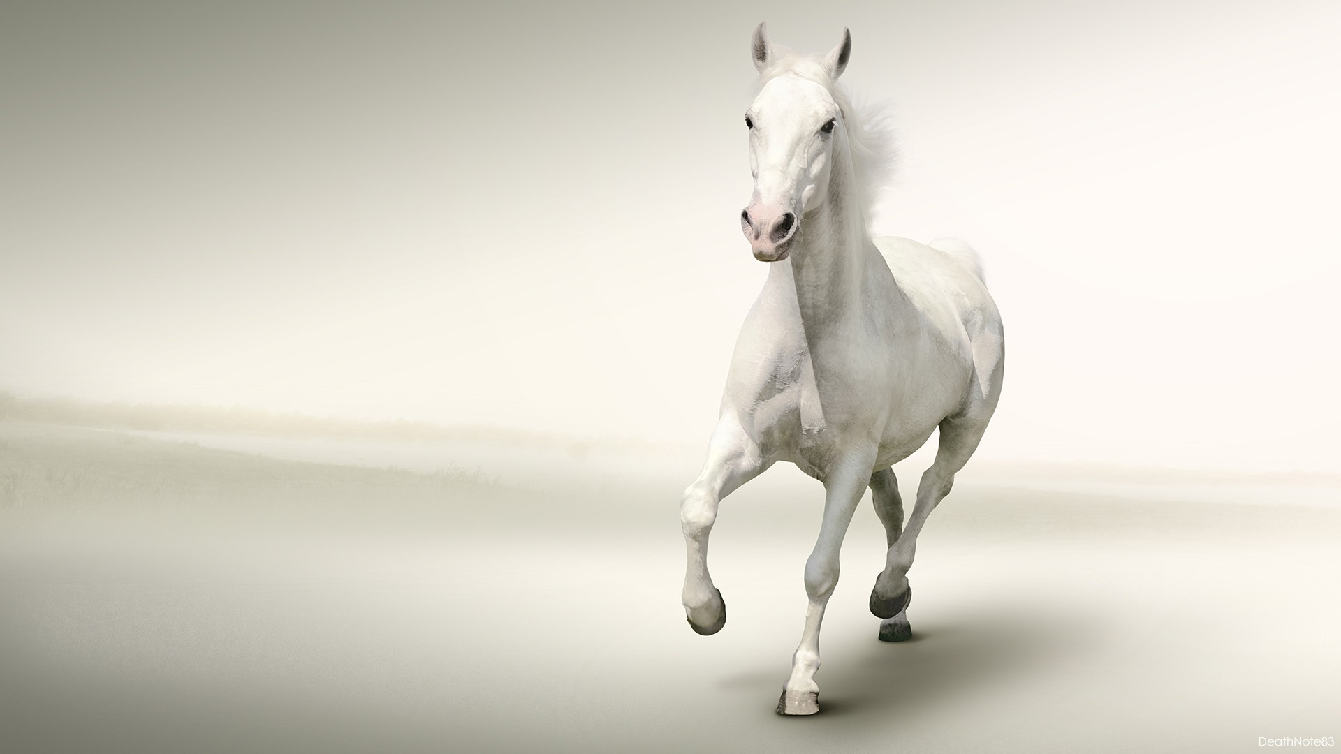 Free Download Running White Horse Hd Wallpaper 1920x1080 For Your Desktop Mobile Tablet Explore 44 Horse With White Background White Horse Wallpaper Black And White Horse Wallpaper