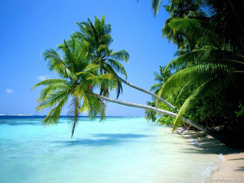 Paradise Beach 1024x768