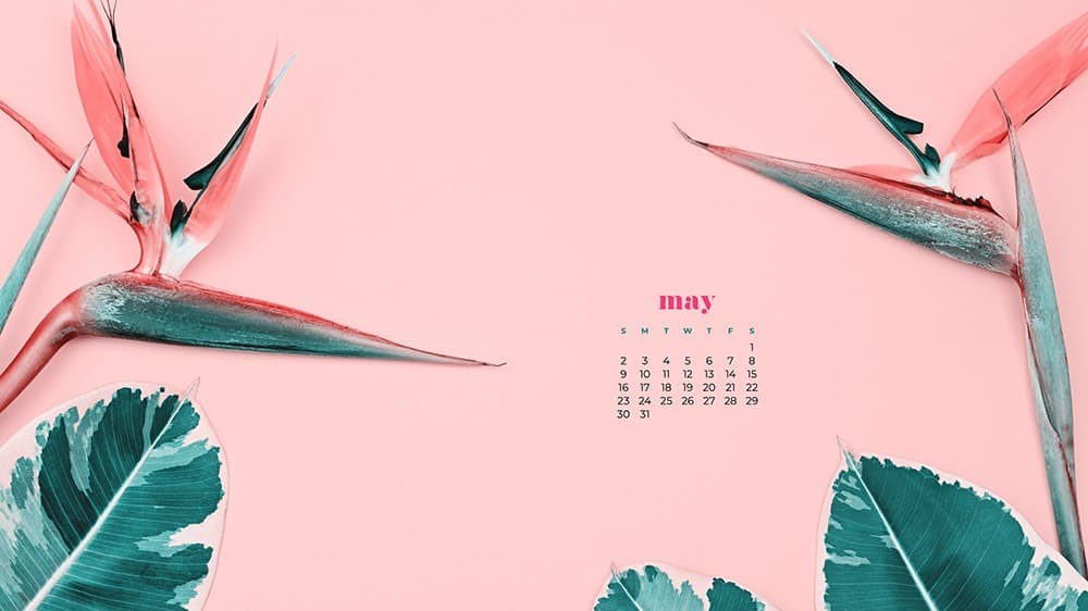 May 2021 wallpaper calendars 30 FREE cute and colorful options 1000x562