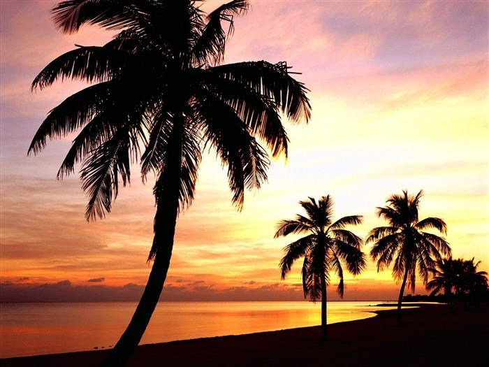 beautiful palm tree wallpaper   wwwhigh definition wallpapercom 700x525