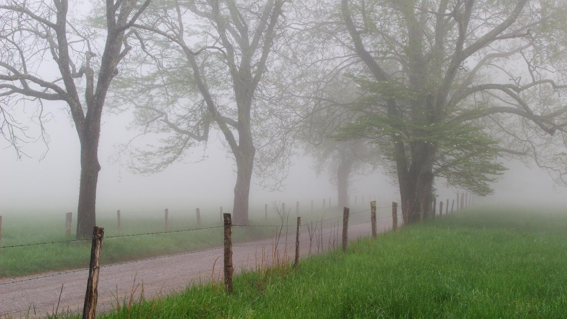 Spring Foggy Wallpapers Wallpapersafari
