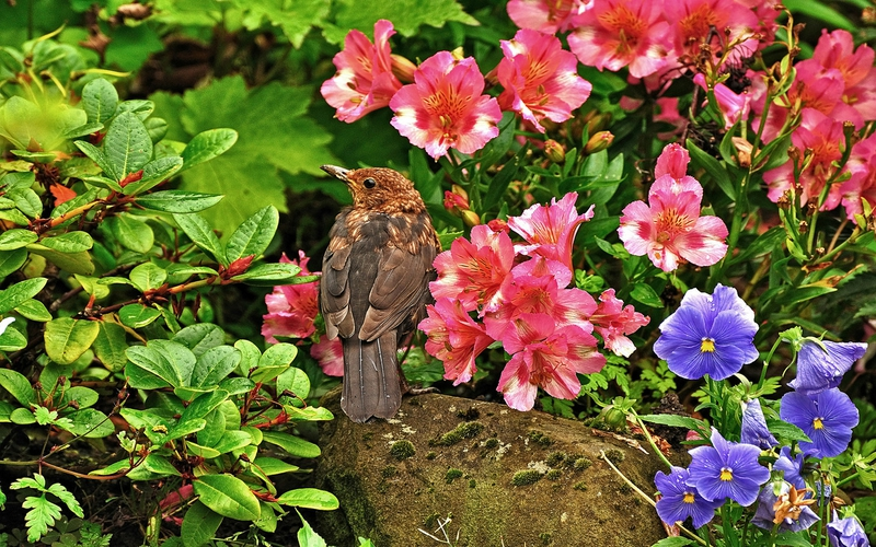 Flower And Bird Wallpaper Birds Flowers Bird And Flowers 800x500