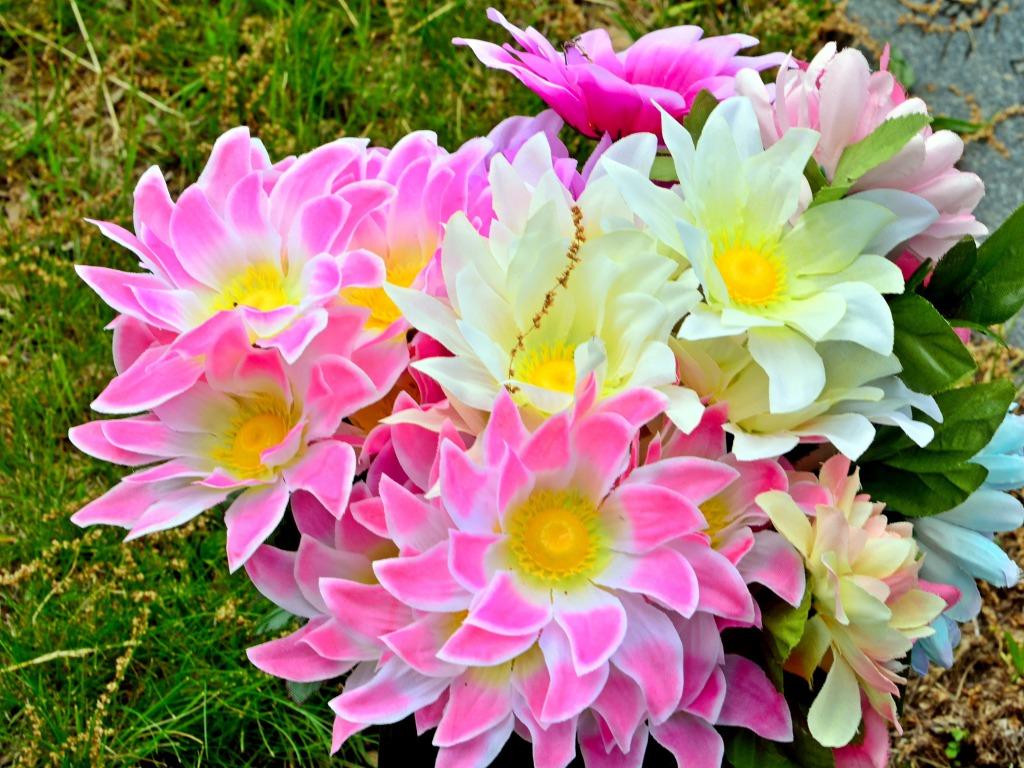 Pretty Flowers Wallpaper Wallpapersafari