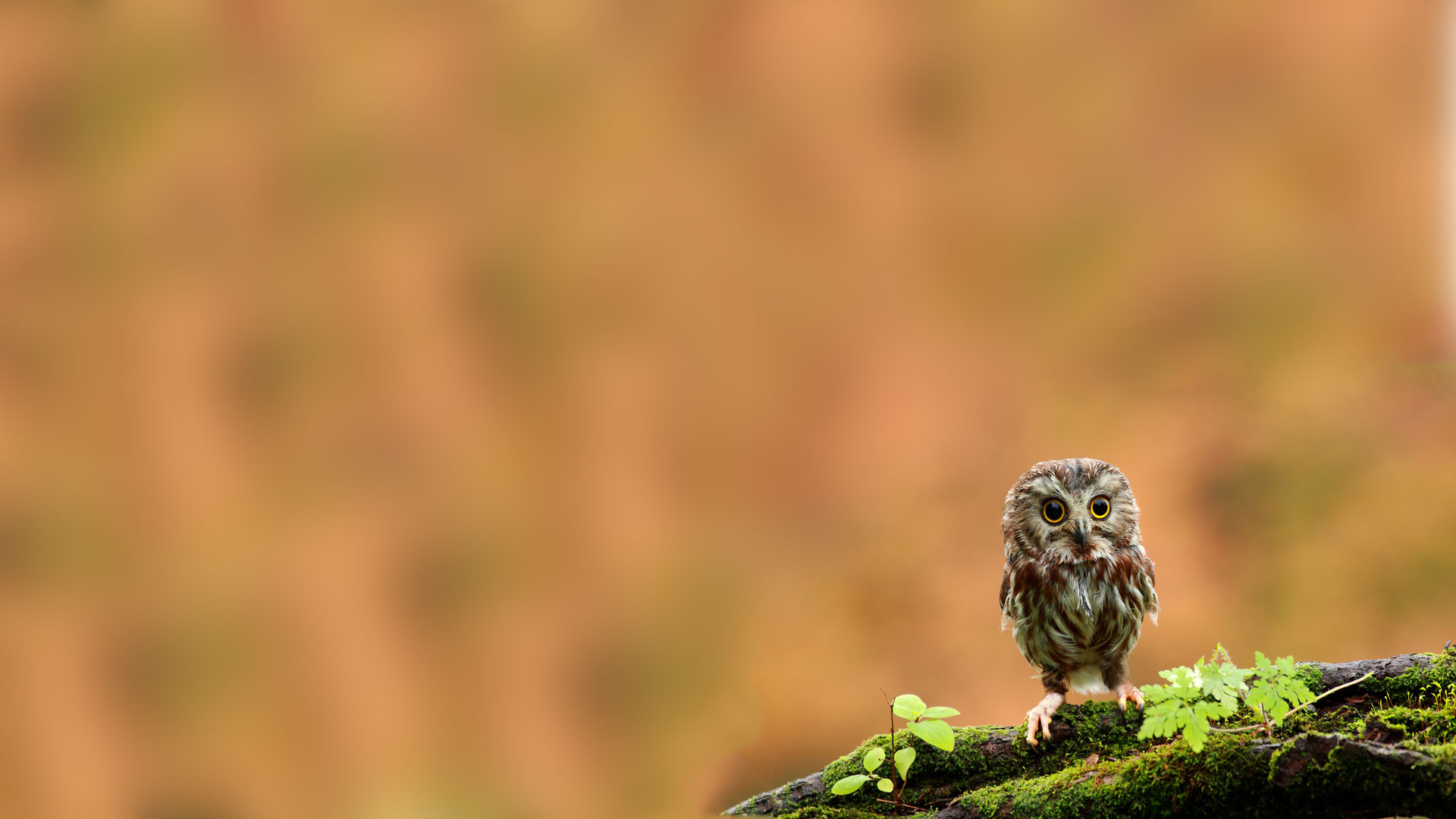 45 Cute Owl Wallpaper Hd On Wallpapersafari
