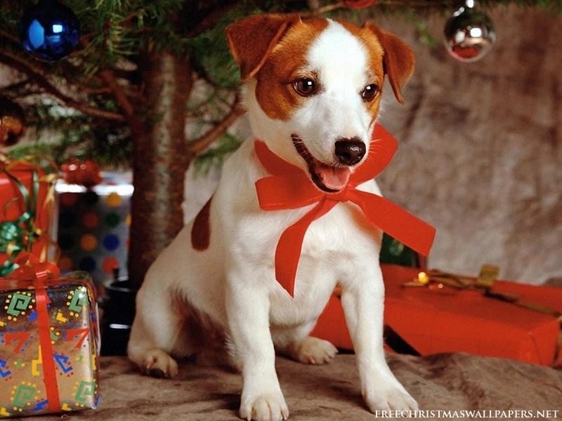 Download Sweet Dog Under Xmas Tree 1024x768 800x600